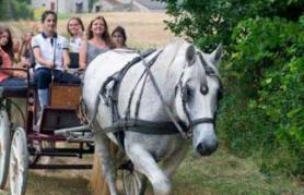 Promenade-classe-equitation